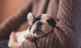 Teràpia amb gossos